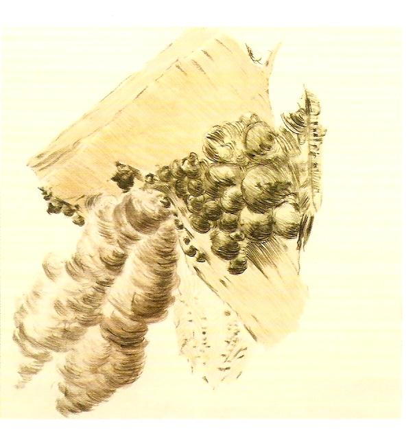 Aguarela sobre papel,  63x66 cm